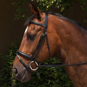 Padded Flash Bridle and Reins
