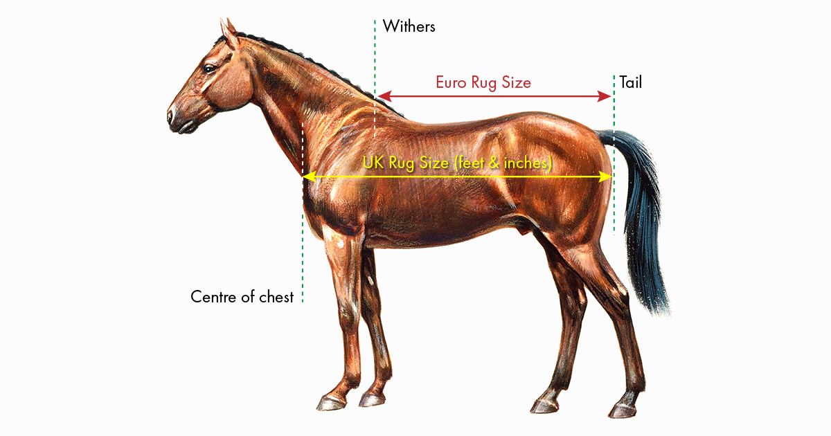 How To Fit A Horse Rug