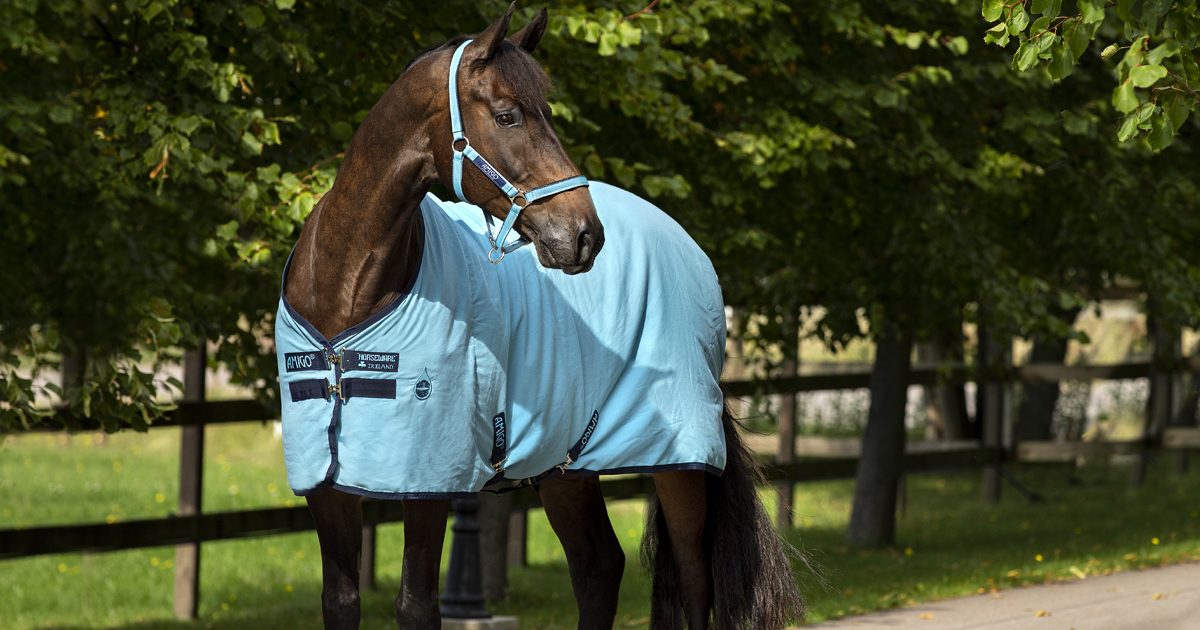 How To Fit A Horse Rug Blog