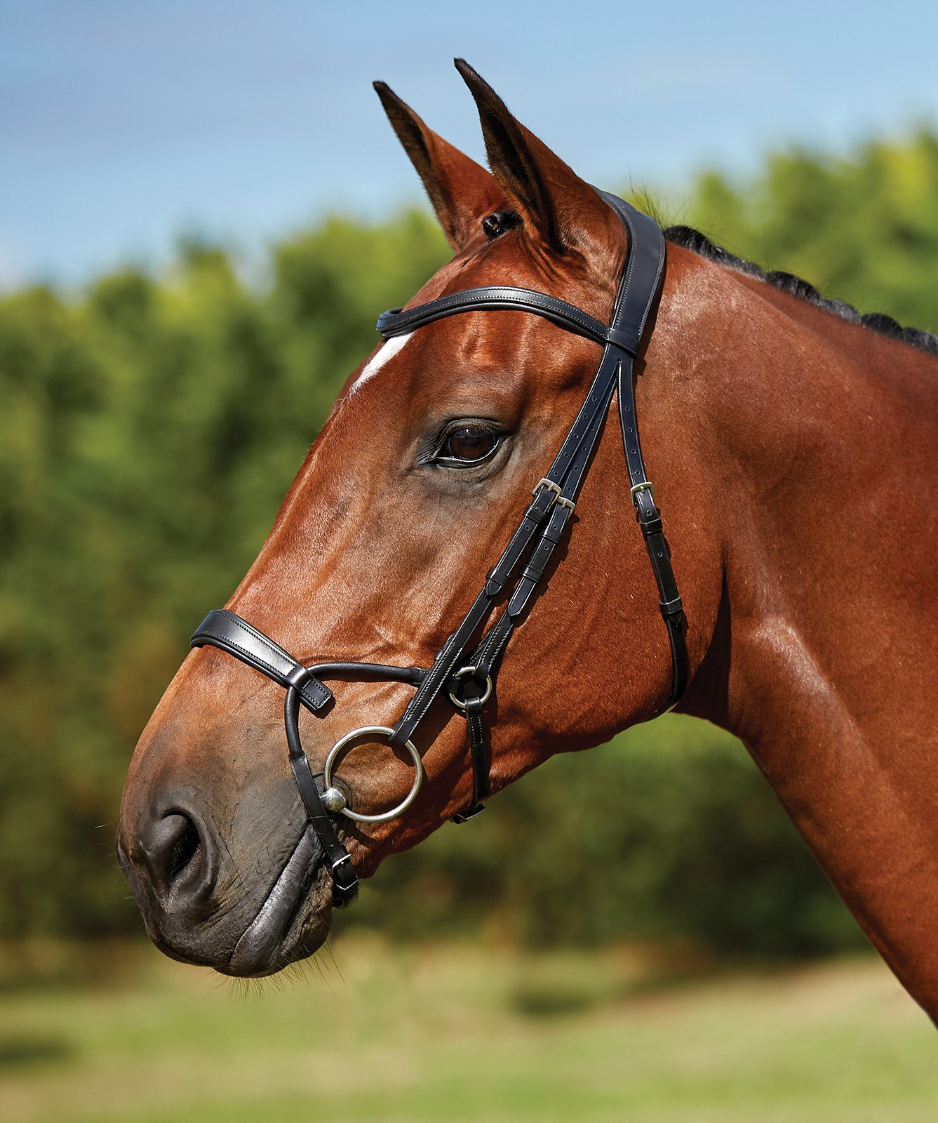 Robinsons Equestrian Home Page