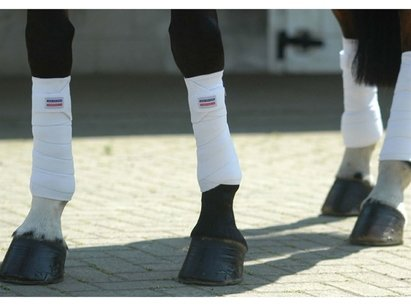 John Whitaker Training Bandages