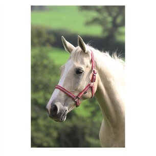 Shires Wessex Head Collar