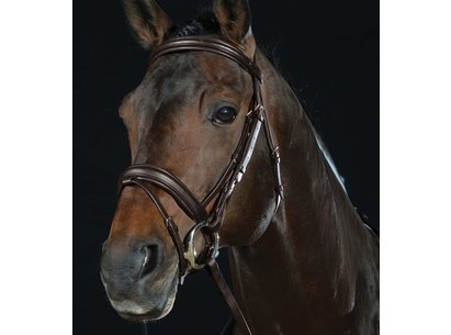 Collegiate Raised Flash Bridle