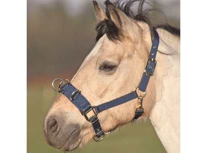 Shires Lunge Cavesson