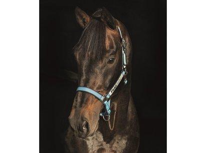 Horseware Rambo Fieldsafe Headcollar