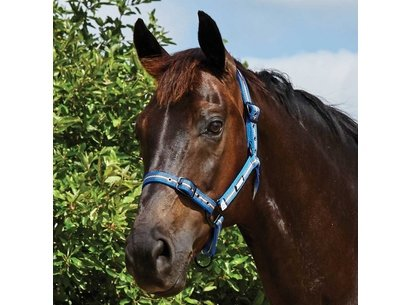 Roma Coordinating Headcollar