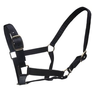 Roma Headcollar and Lead Rope Set