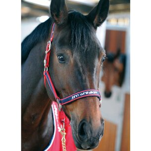 John Whitaker Padded Head Collar