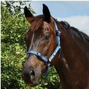 Coordinating Headcollar