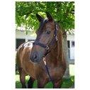 Horse Halter - Rose