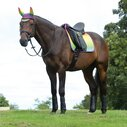 Prime Ombre Dressage Saddle Pad - Rainbow Lust