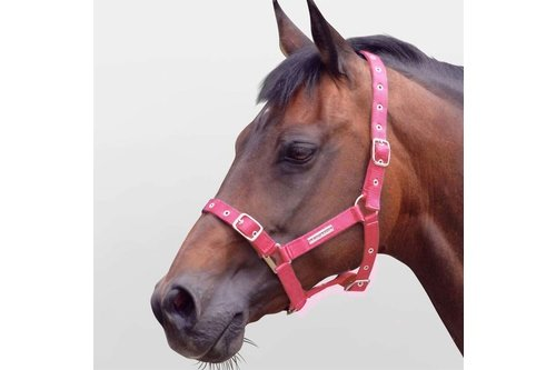 Adjustable Headcollar