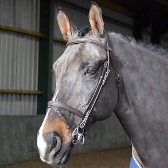 Ready to Ride Flash Bridle