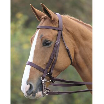 Aviemore Double Bridle